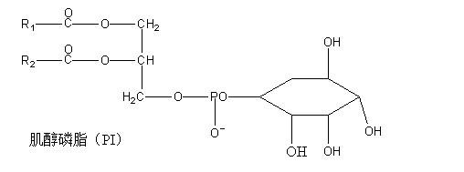 大豆卵磷脂的分子结构式?图片