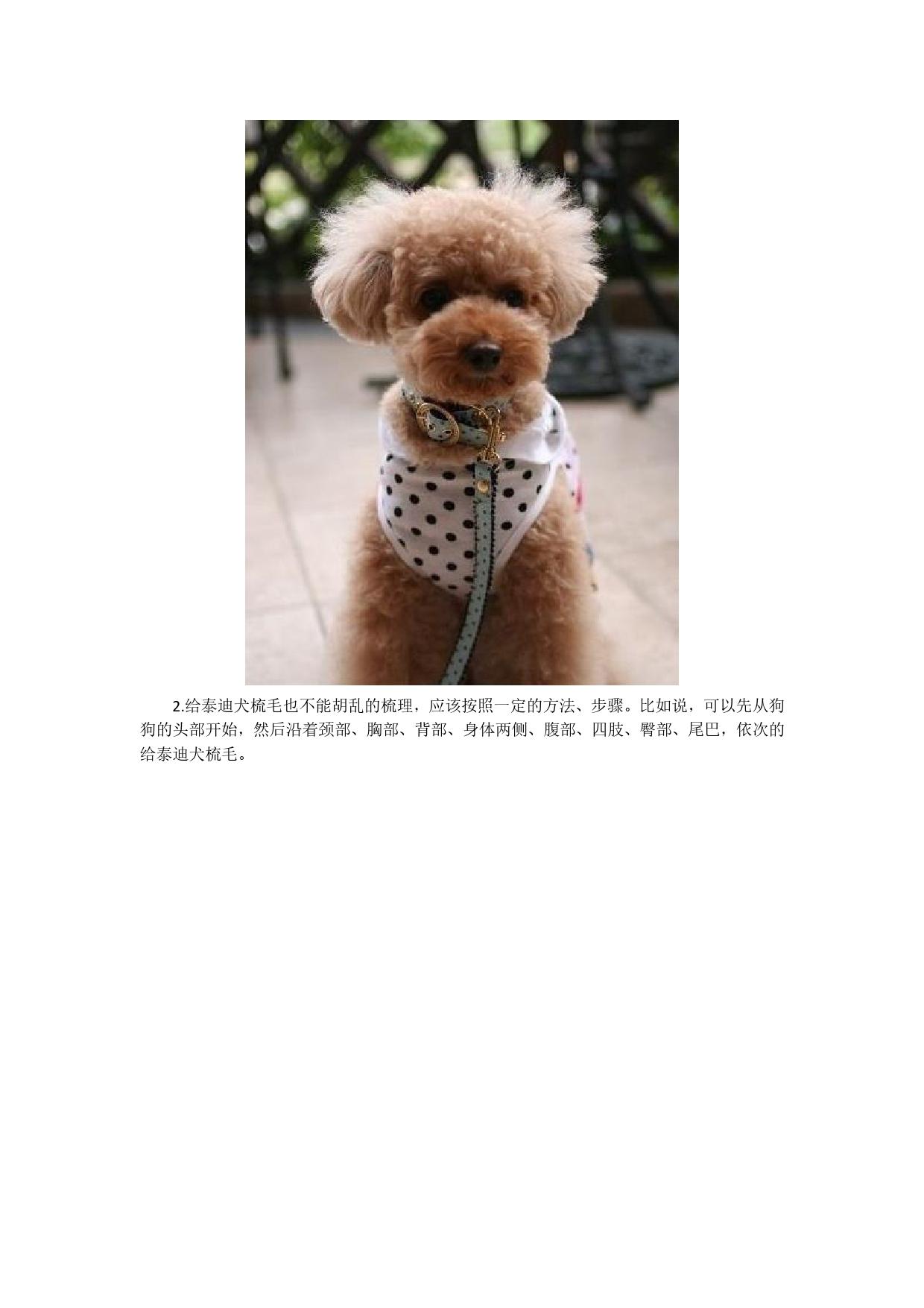 泰迪狗的发型怎么剪