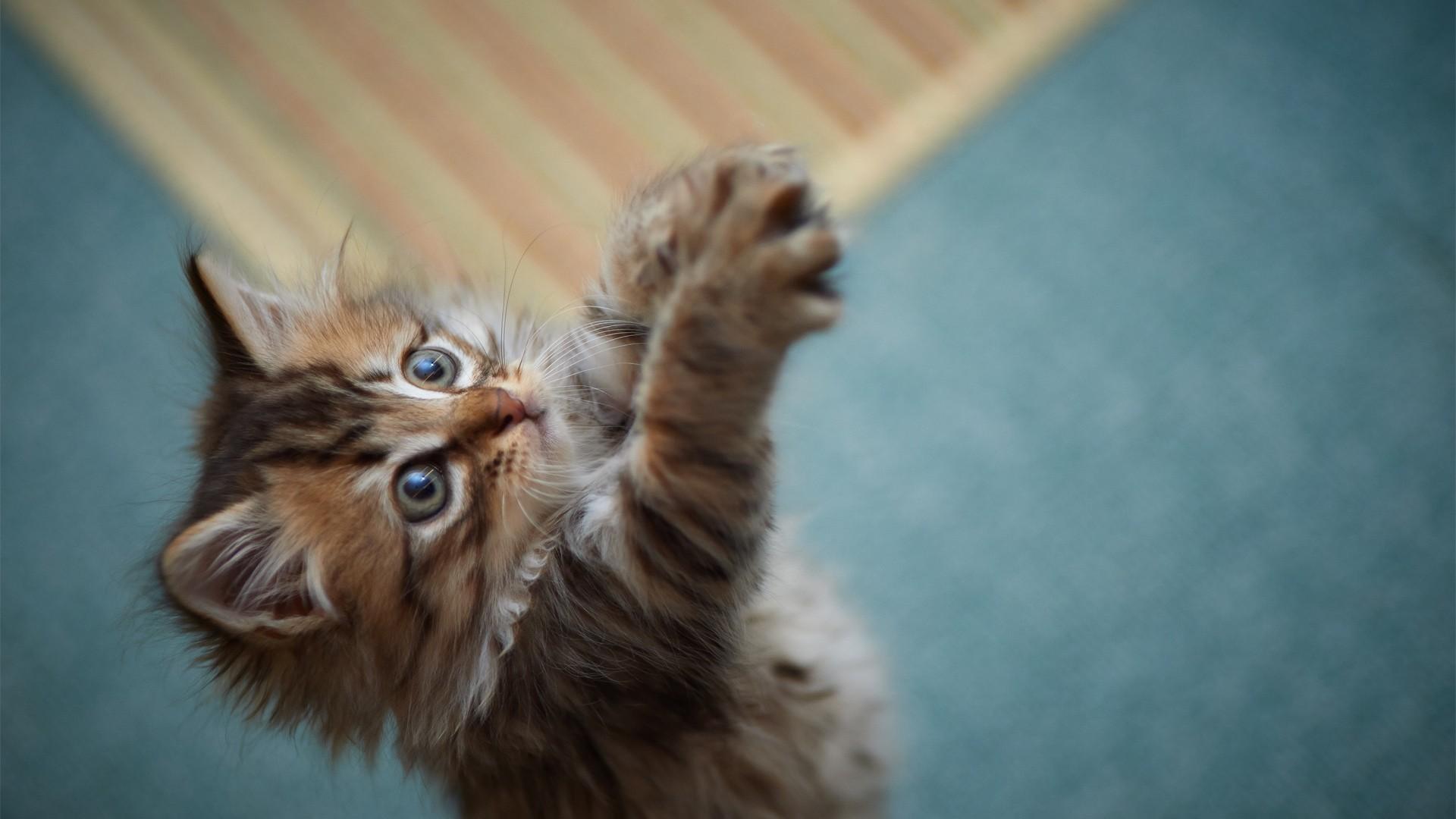 可爱小猫咪的图片(黄色的)