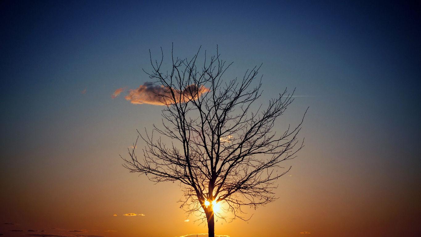 求一张日出被一棵孤独的树挡住阳光的图非常美求这张图片壁纸