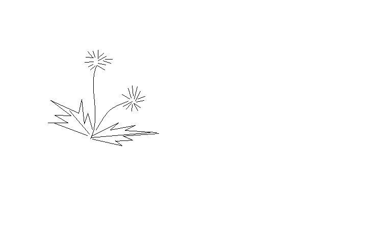 如何画蒲公英简笔画?