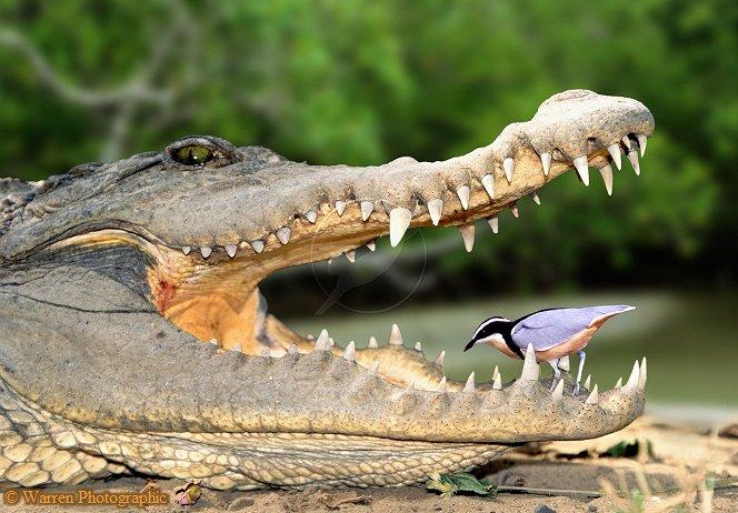 鳄鱼面具手工制作步骤