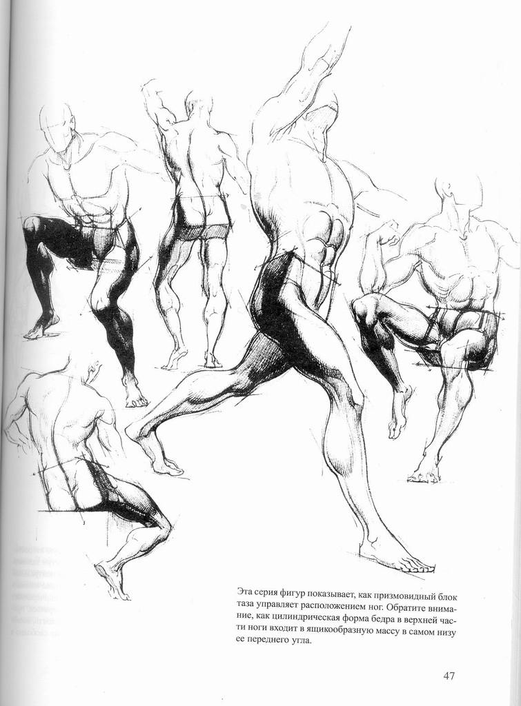 人体解剖图铅笔画