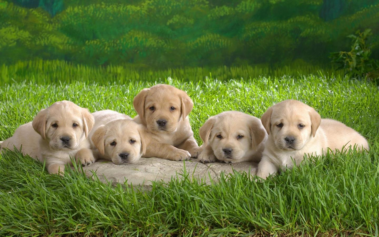 """请问这些幼犬是什么品种的狗狗?有些可能是一种(图2)  请问这些幼犬是什么品种的狗狗?有些可能是一种(图4)  请问这些幼犬是什么品种的狗狗?有些可能是一种(图6)  请问这些幼犬是什么品种的狗狗?有些可能是一种(图8)  请问这些幼犬是什么品种的狗狗?有些可能是一种(图10)  请问这些幼犬是什么品种的狗狗?有些可能是一种(图12) 为了解决用户可能碰到关于""""请问这些幼犬是什么品种的狗狗?有些可能是一种""""相关的问题,突袭网经过收集整理为用户提供相关的解决办法,请注意,解决办法仅供参考,不代表本网同"""