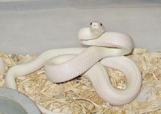 孕妇梦见蛇下蛋和家人