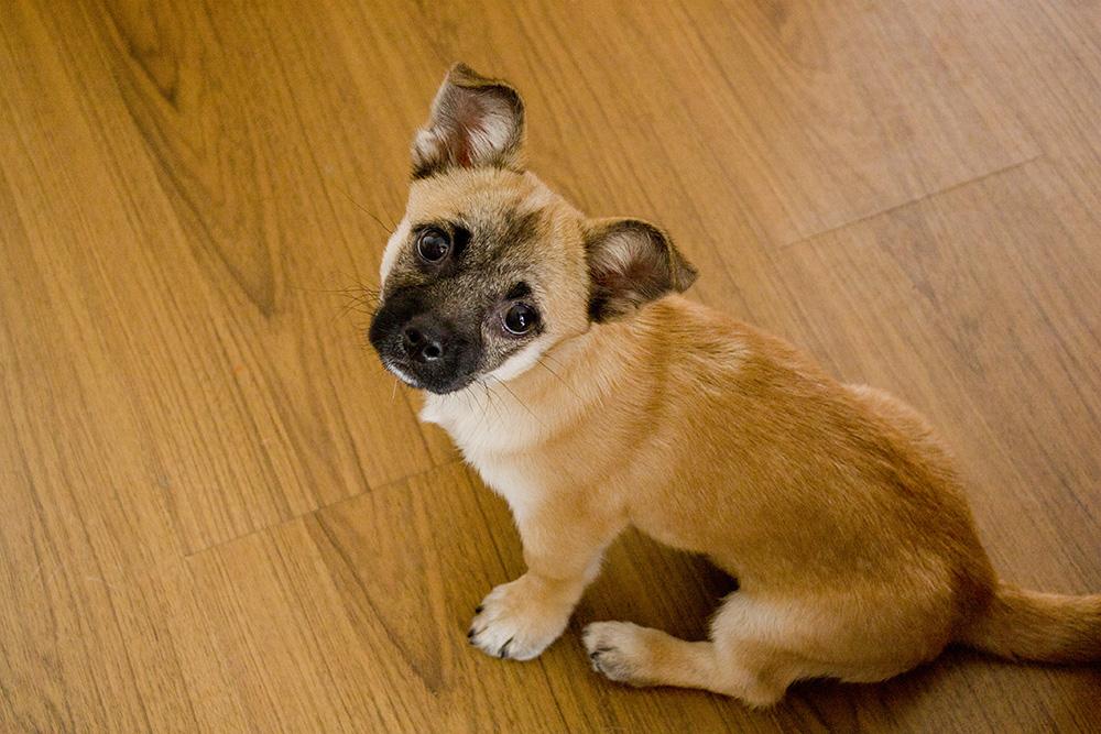 狗的种类傹.���/_这条狗是什么品种