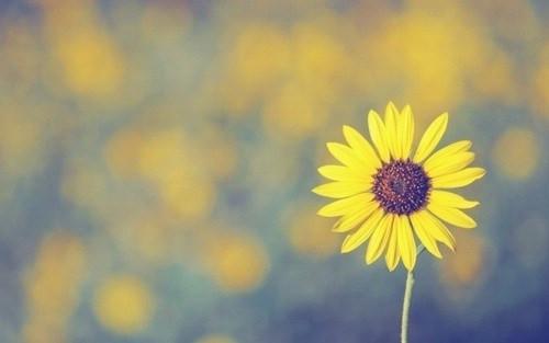 找个意境较美,图片不复杂适合p字的 向日葵头像
