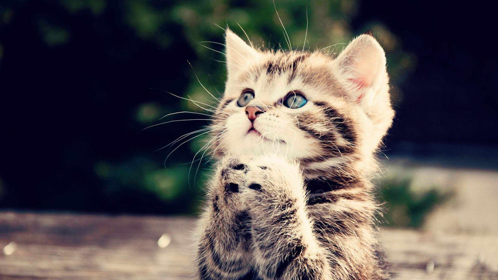 世界上哪个小猫咪最可爱