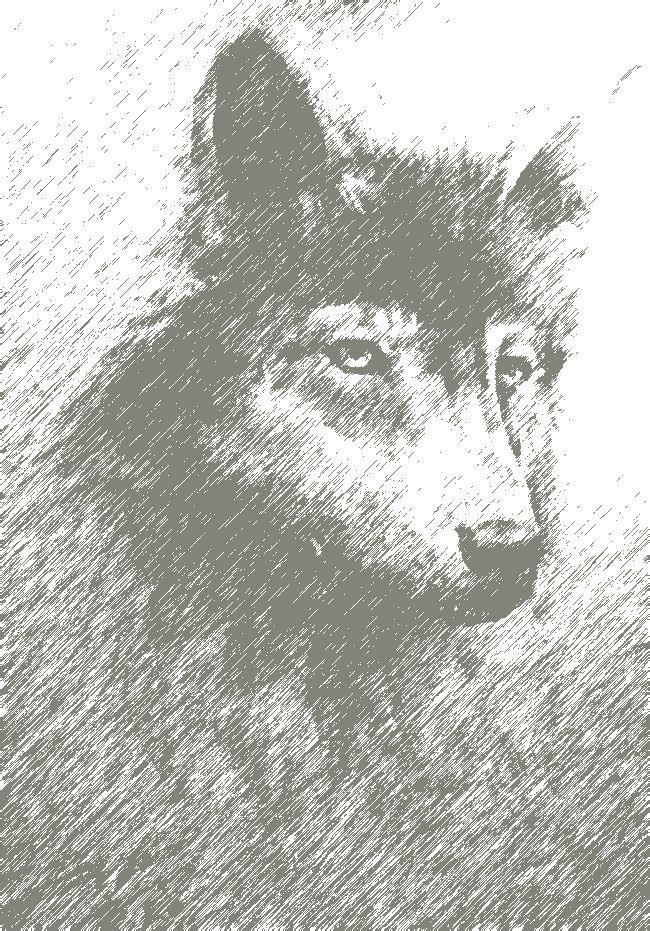 谁有狼头的素描图片啊?