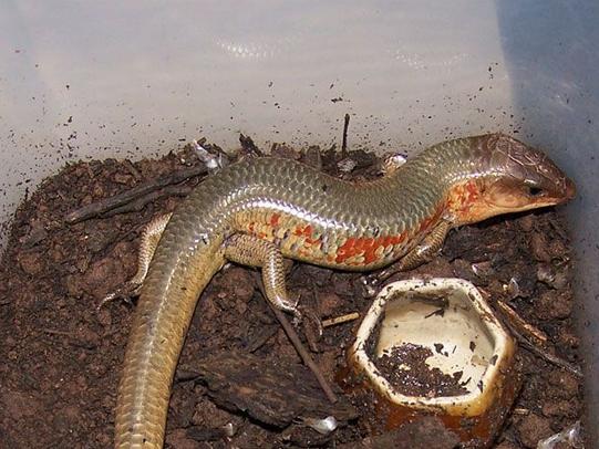 蛇蛇…………这是什么蛇…只有农村才有…我有钱