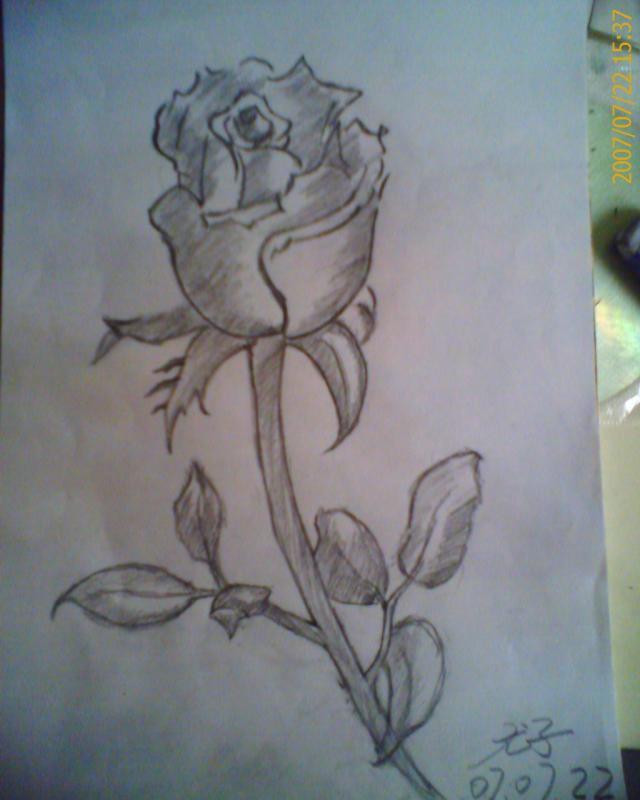 帮我找一些用铅笔画的玫瑰花好吗? 不要有颜色的!要用