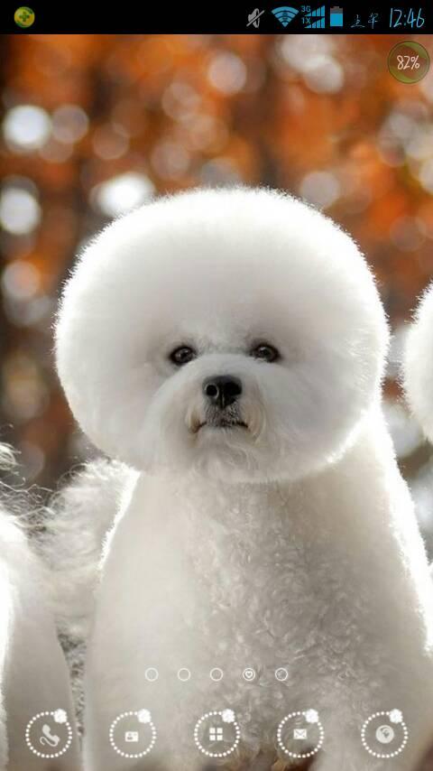这只圆嘟嘟的狗狗叫什么狗?