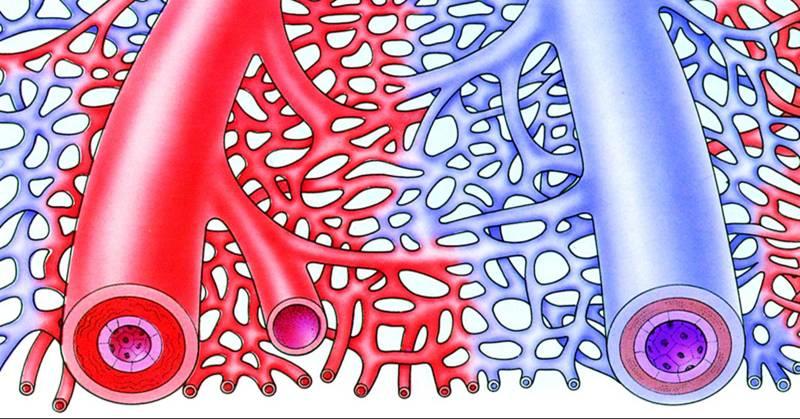 关于七下生物一张血液循环的图片,,谁能帮忙解释下.图片