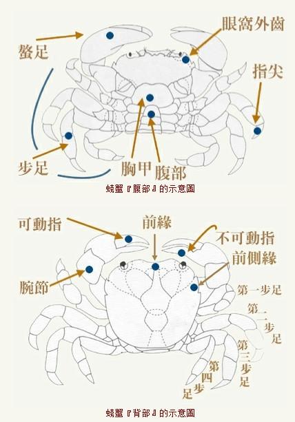 胃的结构图高清晰
