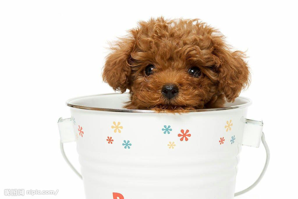 最萌的茶杯动物