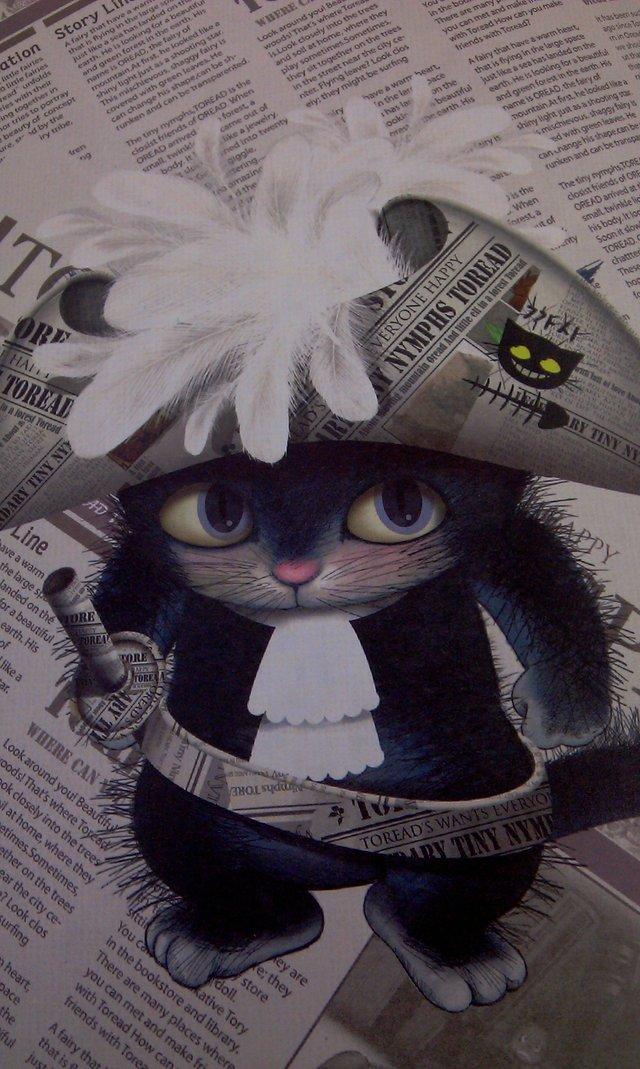 哪里有toread海盗猫图片