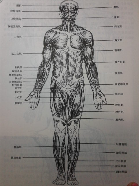 求人体骨骼 肌肉 素描图片.如四肢 脊柱等,谢谢要 素描图片哦.
