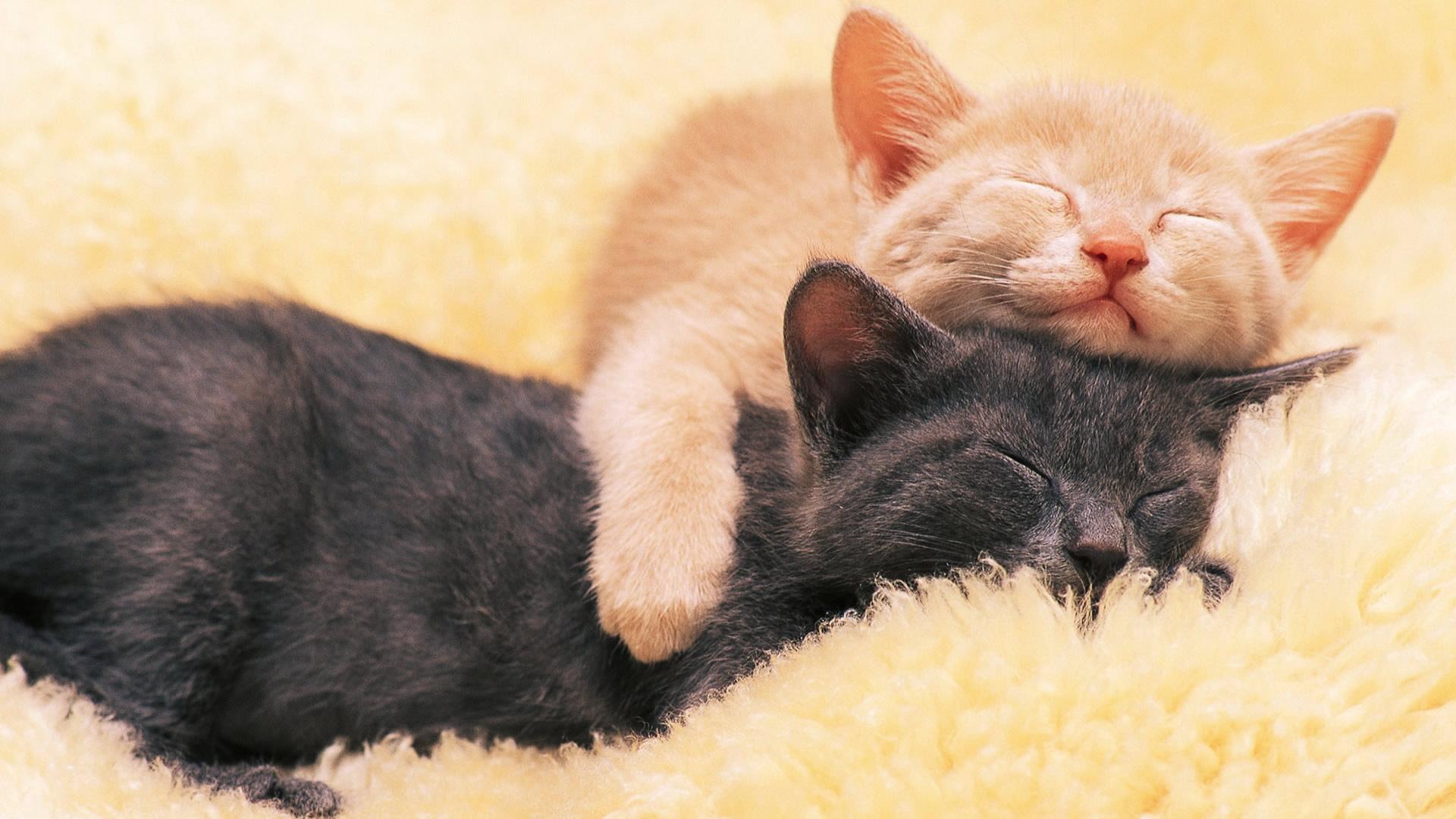展开全部 是一张两只猫咪睡觉的大图图,但不是漫画版的,还是很可爱的