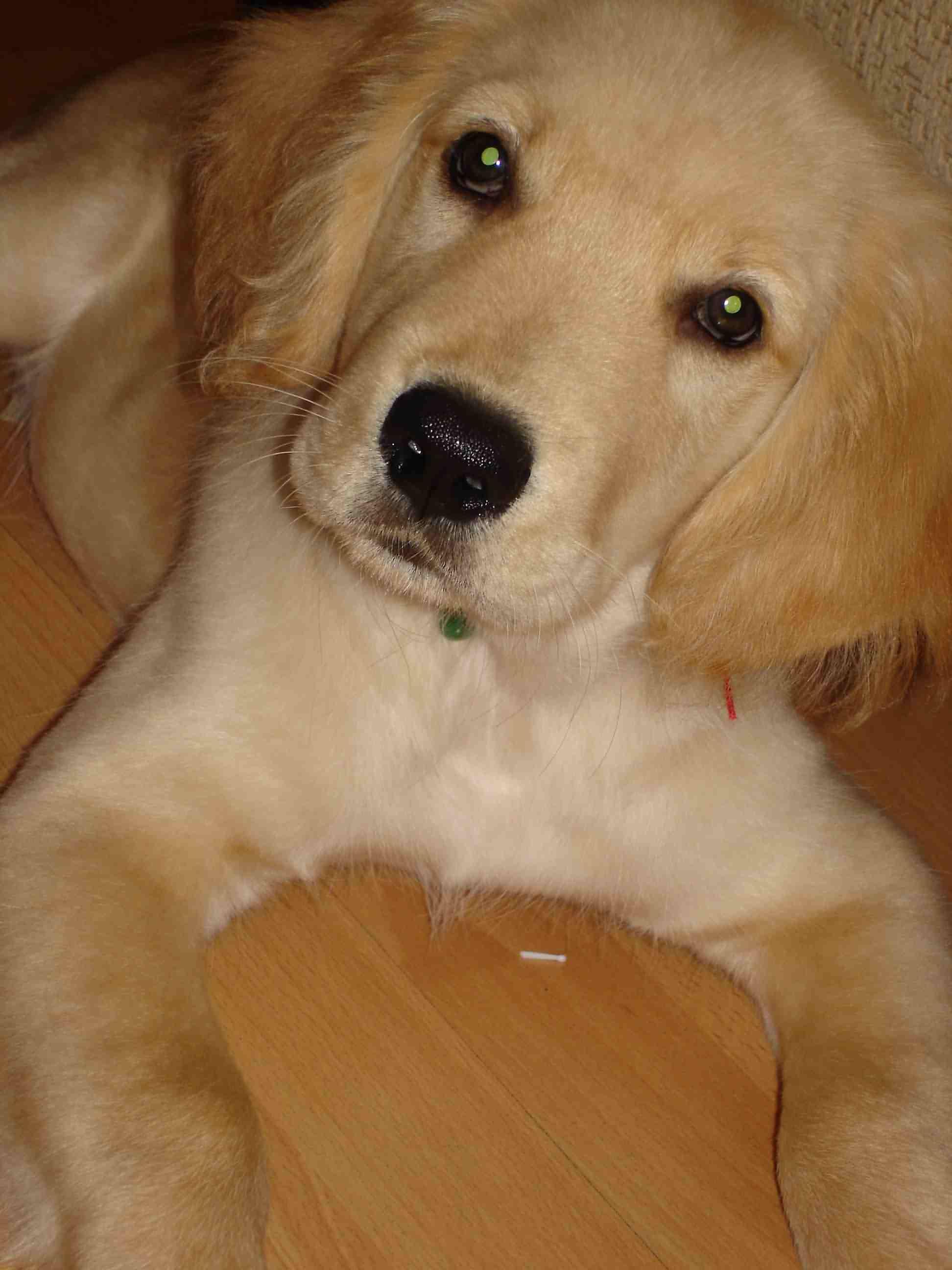 谁有金毛犬qq头像,就是人物和金毛犬的自拍头像之类.