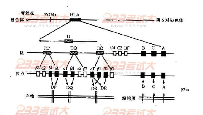 结构基因:是决定合成某一种蛋白质或rna分子结构相应的一段dna.