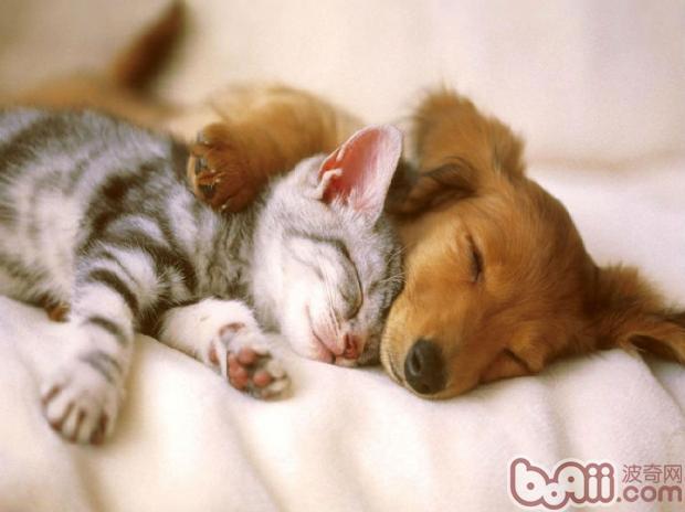 展开全部   很多人都觉得猫咪和狗狗天生是冤家,只要猫咪和狗狗碰在