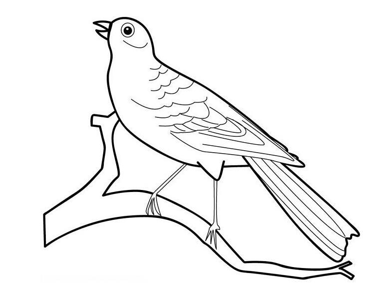喜鹊最最简单的简笔画怎么画