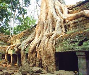 根的形态与结构