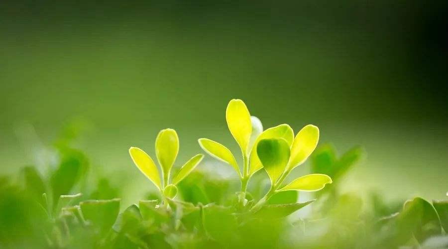 春草图,春花图,春风图,春雨图四幅图顺序能否调换,为什么?