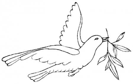 和平鸽图片手绘