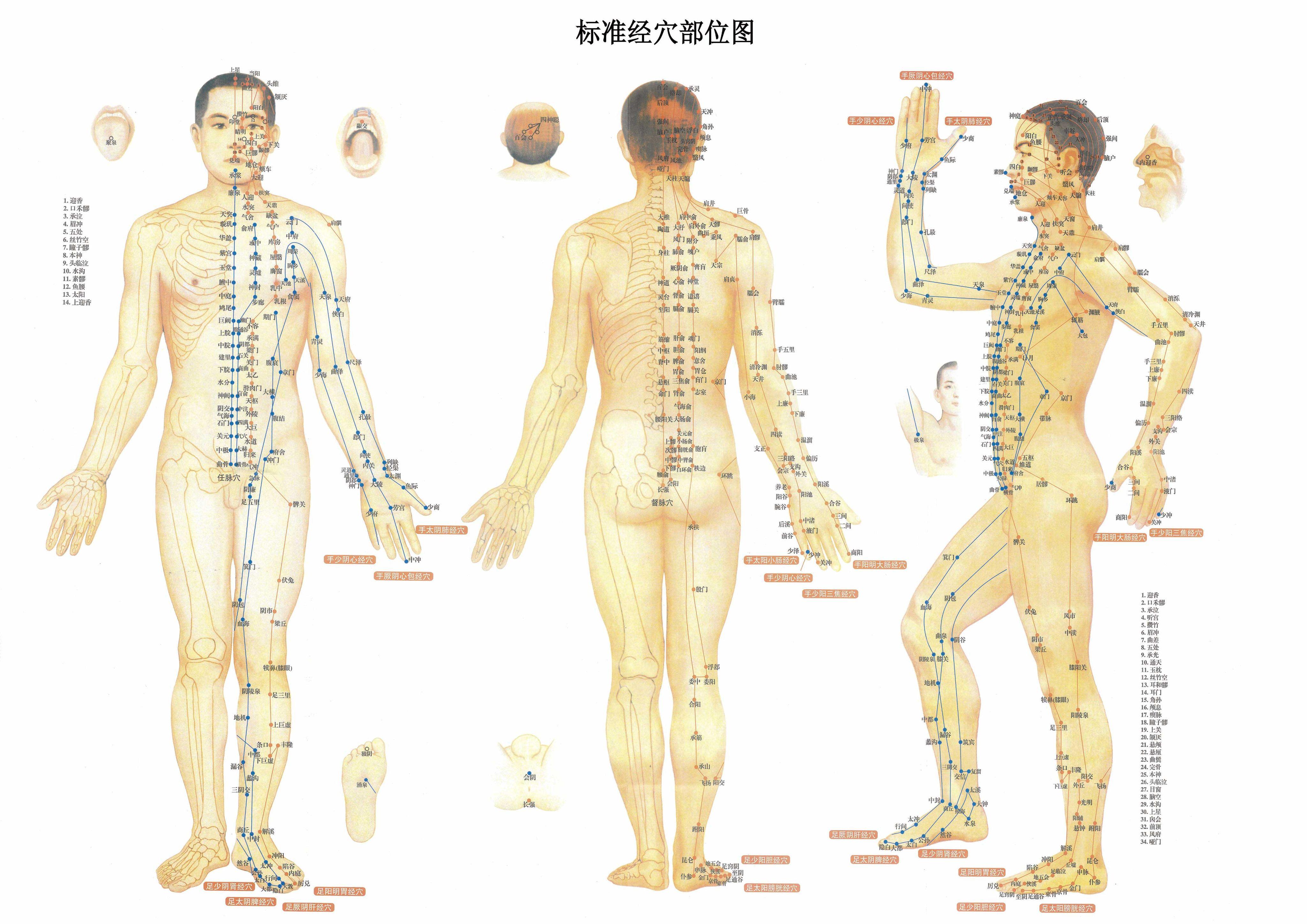 好胸好穴_胸部正中央的穴位叫什么?(最好附张人体学位分布图)谢谢!