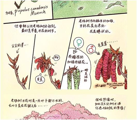 四年级植物自然笔记倒底怎么画