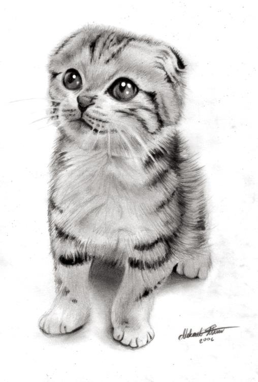 画精微素描求适合画精微素描的图片,最好是动物类,多多益善.