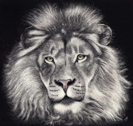 给我几张白描的动物图 要求图片一定要高清 不高清什么用都没有 动物