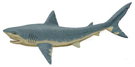 海里的动物怎么画简单素描