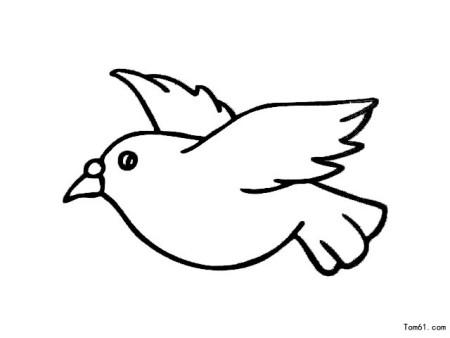 和平鸽的简笔画