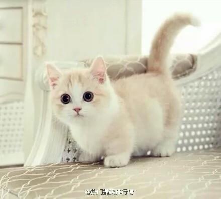 谁有萌萌的猫咪图片给我几张可以吗?