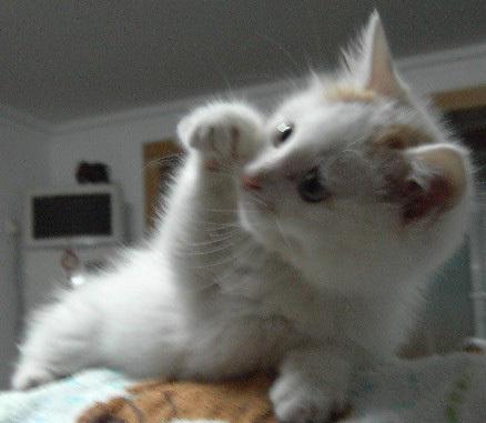 求超可爱猫咪图片