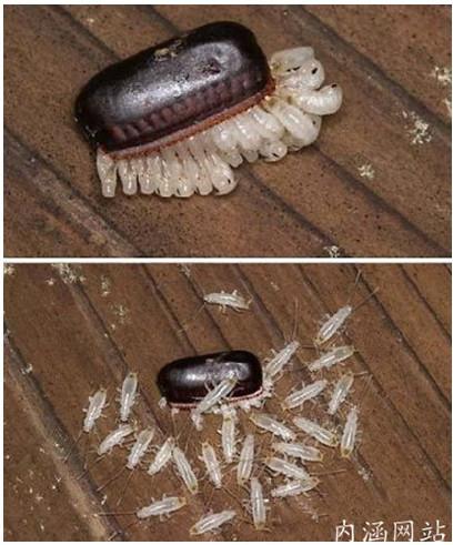爆笑虫子手绘图