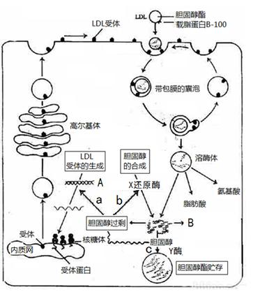 细胞的基本结构知识网络