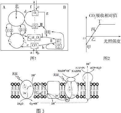 图1表示发生在高等植物叶肉细胞内的a,b两项生理作用