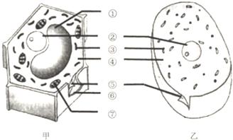 如图为植物细胞和动物细胞结构模式图,请据图回答图片
