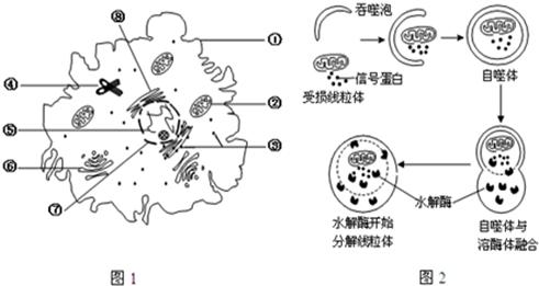 """图1表示动物细胞亚显微结构示意图,图2表示细胞通过"""""""""""