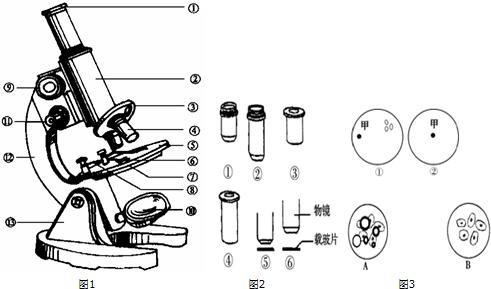 如图1是显微镜结构图,请据图填写各部分结构名称.