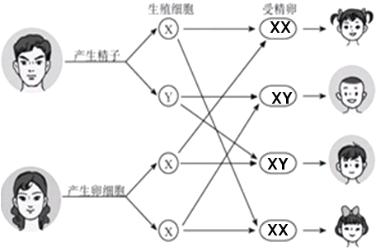 生物变异知识结构图