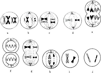 (1)由图判断该动物为______性,图中属于有丝分裂的图象有______(填字