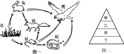 图一表示某生态系统中的食物网;图二表示某条生物链中