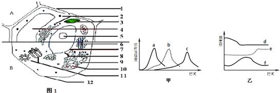 图1表示动物,植物细胞二合一亚显微结构模式图.([]内填序号)