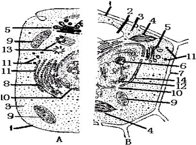 如图表示动物,植物细胞二合一显微结构模式图.(1)若某