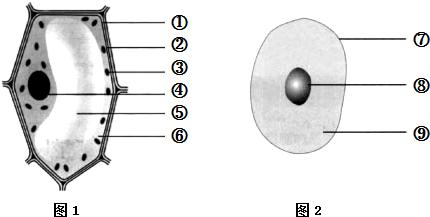 (5)下列生物中不具有细胞结构的是______ a.海带b.衣藻 c.葫芦藓d.