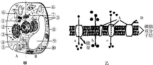 如图为动植物细胞亚显微结构及细胞部分结构示意图,据图回答下列问题